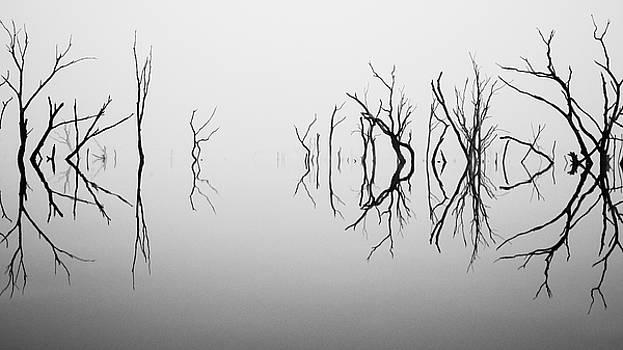 Dancing in the Fog by Crystal Socha