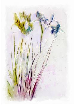 Dancing Irises by Jill Balsam