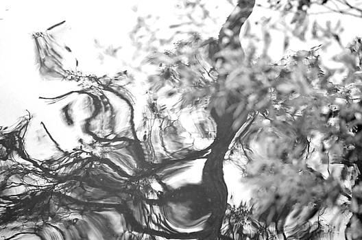 Dancing Leaves by Linda Geiger