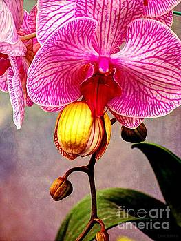 Dancing Orchid  by Dani Stites