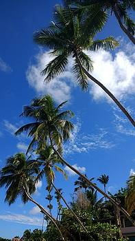 Dancing Palm Trees by Sheryl Chapman Photography