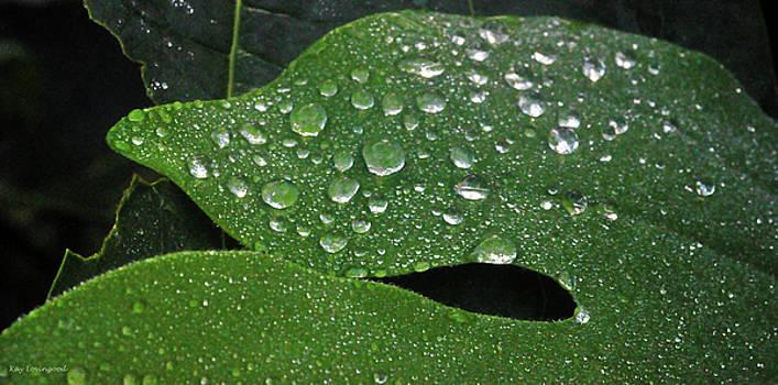 Kay Lovingood - Dancing Raindrops