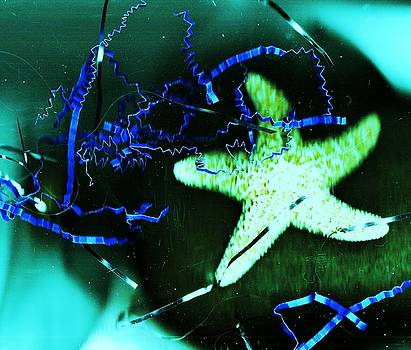 Dancing Starfish by Anne-elizabeth Whiteway