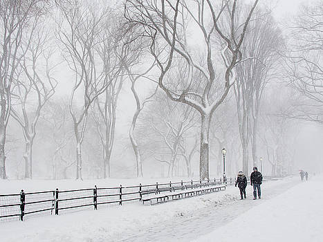 Dancing Trees in a Blizzard by Cornelis Verwaal
