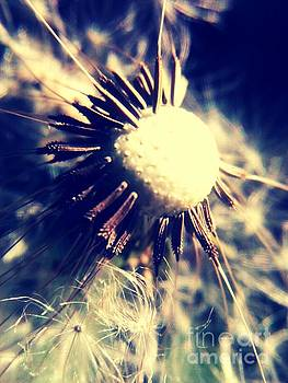 Dandelion 3 If wishes were horses beggars would ride by M Brandl