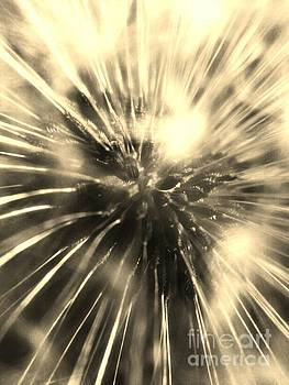 Dandelion 7 If wishes were horses beggars would ride by M Brandl