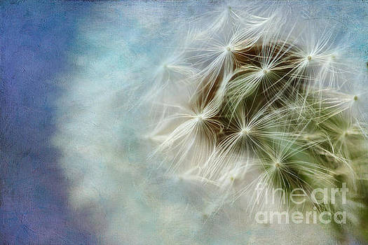 Dandelion Blues by Lisa Cockrell