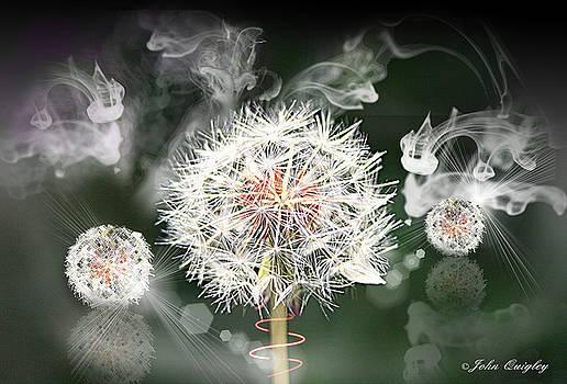 Dandelion Clock by John Quigley