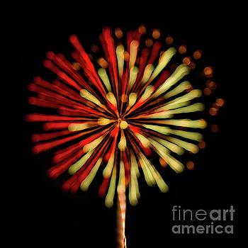 Dandelion Fireworks by Doug Sturgess