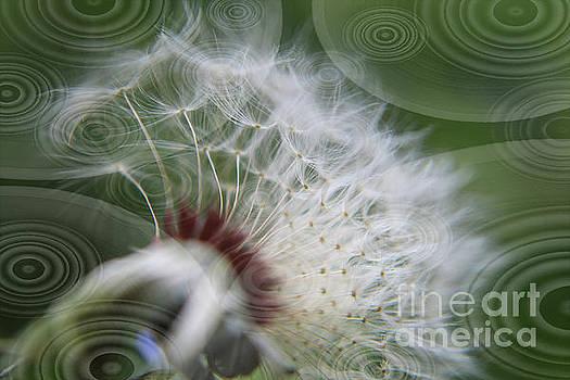 Dandelion Geometric Fusion by Dee Winslow