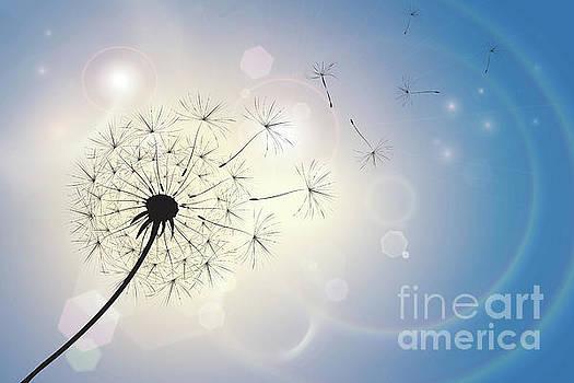 Dandelion in a summer breeze by Jane Rix