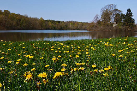 Dandelion Lake by James Reed