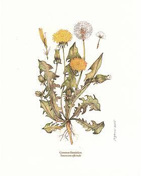 Dandelion by Rose Gauss