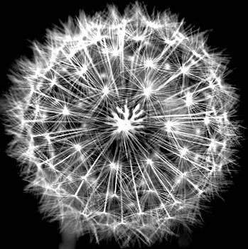 Dandelion by Susie DeZarn
