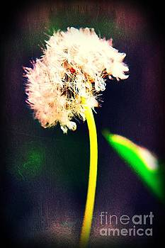Dandelion Thoughts by Becky Kurth