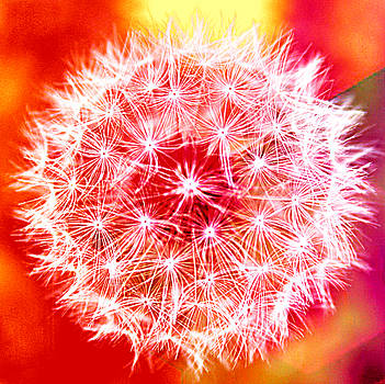 Dandelion Wish by Kori Creswell