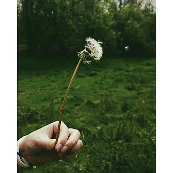 #dandelionclock #dandelion #nature by Natalie Anne
