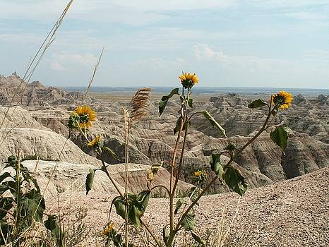 Dandelions in the Badlands by Theresa Willingham