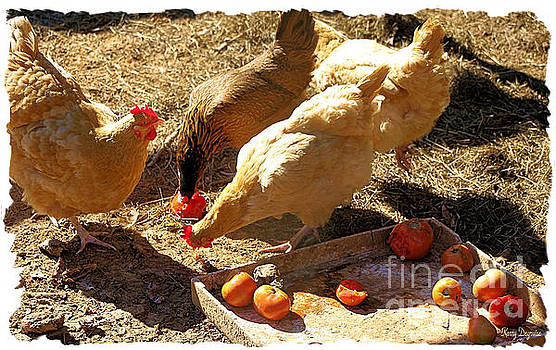Dan's Chickens by Karry Degruise