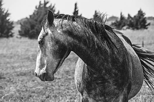 Dappled Grey by Anita Hohl