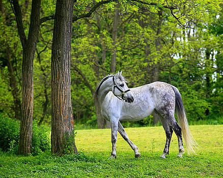 Dappled Grey by Matt Russell