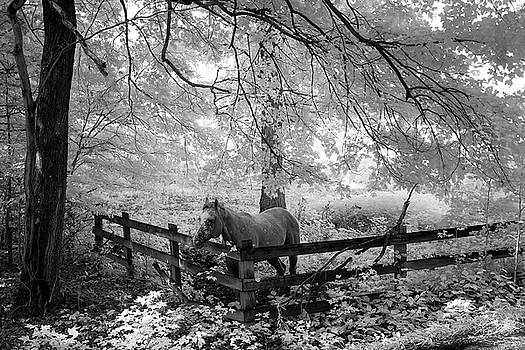Dappled Horse by Paul Seymour