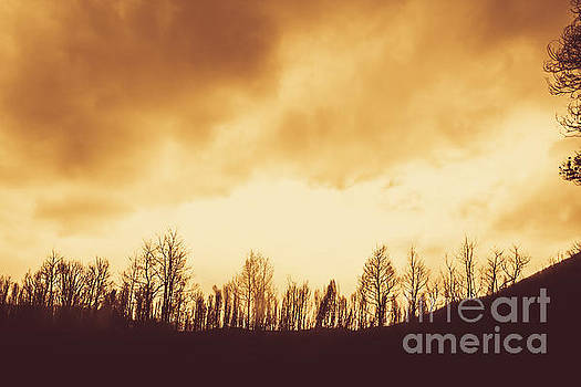 Dark afternoon woodland by Jorgo Photography - Wall Art Gallery