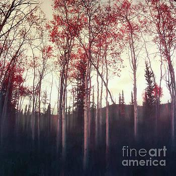 Dark deep woods by Priska Wettstein