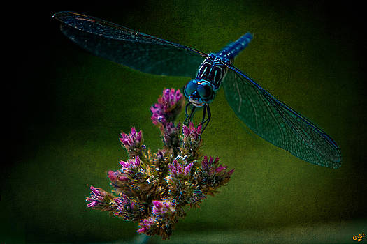 Chris Lord - Dark Dragonfly