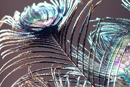 Angela Murdock - Dark Feathers