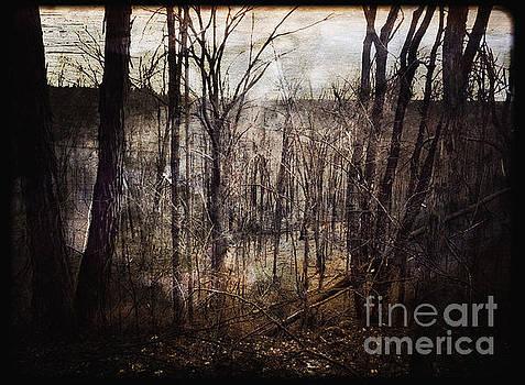 Dark Forest Fine Art by Miss Dawn