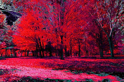 Dark Forest by Cassidy LionHeart