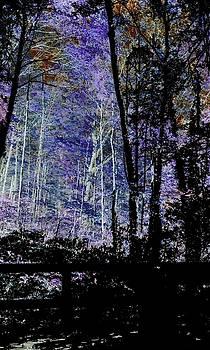 Dark Forest by Ty Welsheimer