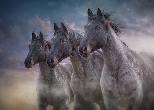 Dark Horses by Debby Herold