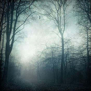 Dark Path - Forest Hike on a November day by Dirk Wuestenhagen