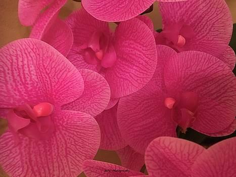 Dark Pink Orchids by Marian Palucci-Lonzetta