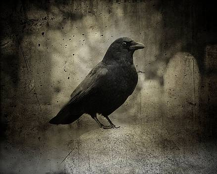 Dark Raven by Gothicrow Images