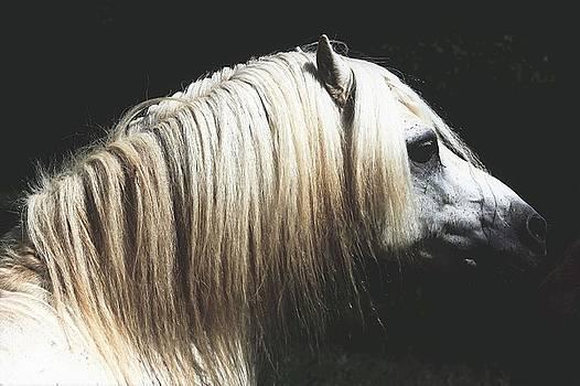 Old World- Welsh Pony Stallion by Susie Gordon