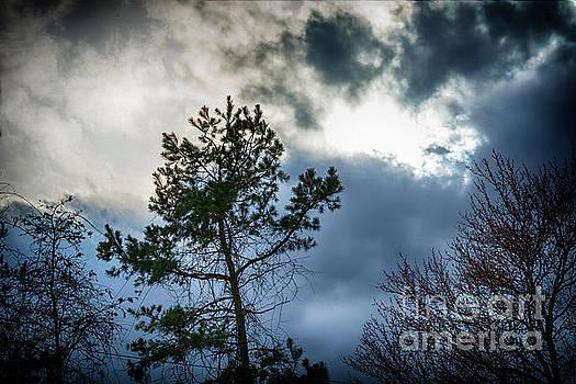 Dark Skys  by JW Hanley