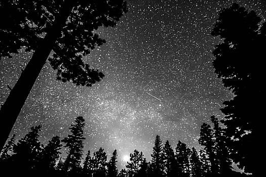 James BO Insogna - Dark Stellar Universe