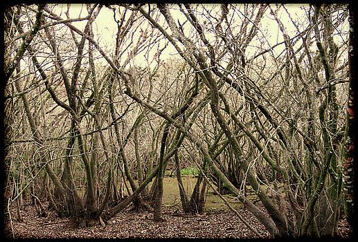 Dark Swamp by Rosalie Scanlon