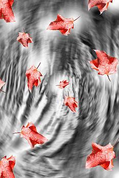 Cathy  Beharriell - Dark Thunderstorm Leaves