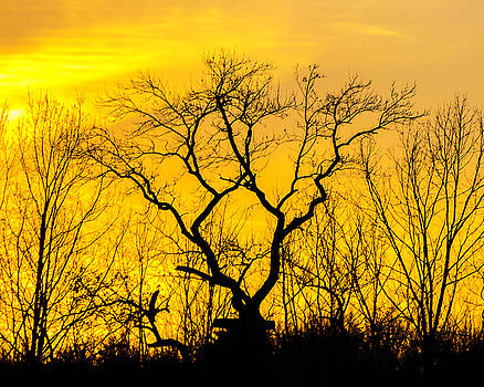 Dark Trees at Sunset by Terry Thomas