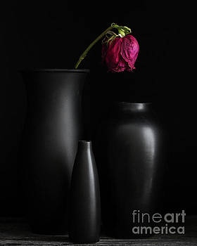 Dark Trio by Linda Hoye