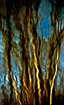 Dark Wood by Gillis Cone