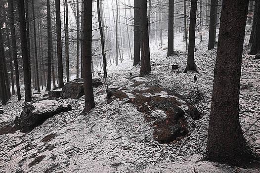 Jenny Rainbow - Dark Woods. Series In Mysterious Woods