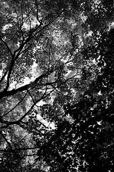 Darklight by Vail Joy
