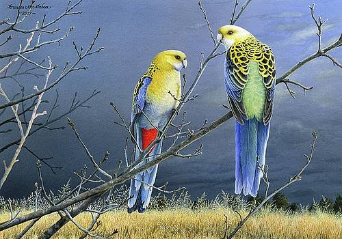Darkness Before the Deluge - Pale-headed Rosellas by Frances McMahon