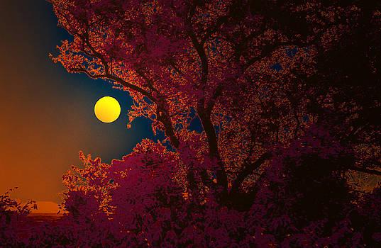 Bliss Of Art - Dark glow of nature