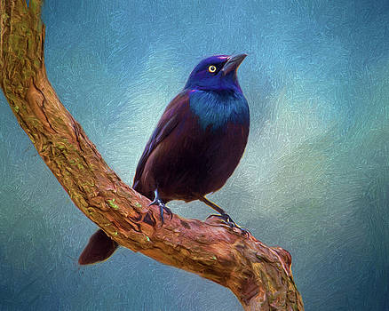 Grackle Perch by Cathy Kovarik